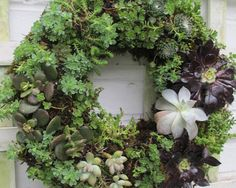 jardines verticales caseros - corona