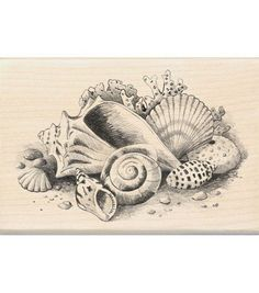 Resultado de imagen para caracolas mar sepia dibujo