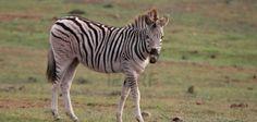 Sientete como en la sabana africana en Safari Park Madrid