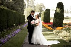 Beautiful wedding photography along tall green shrubbery, lavender flowers