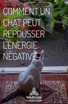How can a cat repel negative energy? Beautiful Cats, Cat Love, Spirit Animal, Feng Shui, Animal Kingdom, Animals And Pets, Mystic, Life Is Good, Labrador