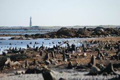 The Drowned Forest - The Hawk, Cape Sable Island. Located on the most southerly tip of Nova Scotia, discover this hidden gem! From the beach you can see Nova Scotia's tallest lighthouse - Cape Sable Light, standing 101 feet tall.