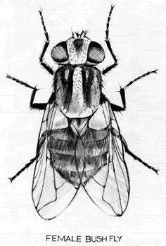 HOW TO MAKE A ZOMBIE ANT The fungus Ophiocordyceps
