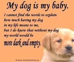 my dog my friend quotes | My Dog is My Baby