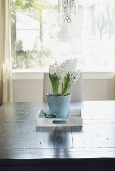 Love the simplicity - robin's egg blue ceramic pot with white hyacinths.