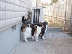Fat cat twins