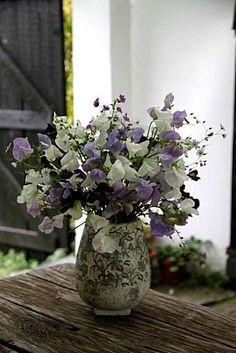Pois de senteur :  Chatsworth  Royal Wedding  Beaujolais  Géranium pyrenaicum alba & Summer Sky