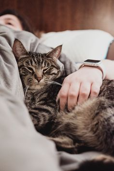 Cat Training Biting person holding gray tabby cat while lying on bed - Cute Kittens, Cats And Kittens, Cats In Bed, Kitty Cats, Cats Bus, Ragdoll Kittens, Bengal Cats, Chats Tabby Oranges, Food Dog