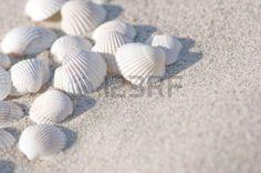 Weiße Muscheln im Sand; maritime Eindrücke Lizenzfreie Bilder