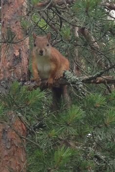 squirrel chatting