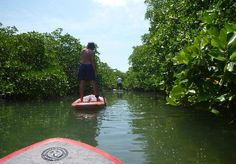 paddleboarding in the mangroves - Picture of Caye Caulker, Belize ...