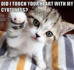 DID I TOUCH YOUR HEART WITH MY CYUTENESS? http://cheezburger.com/9055507456