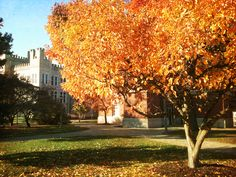 Gorgeous fall colors in front of Cook Hall at Illinois State University in November 2013.