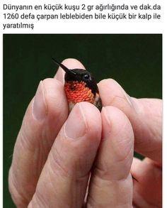 Dünyadaki en küçük kuş
