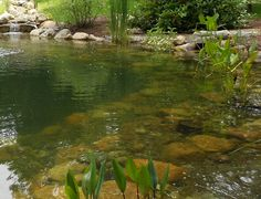 How to Create Pond,Natural Pond,Pond Equipment,Pond Maintenance