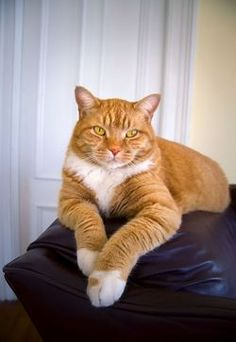 1000 Images About Cats In Orange On Pinterest Orange Cats Ginger Cats And Orange Kittens