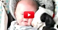 If You Need A 14 Second Pick-Me-Up, This Video Is Just For You! So Cute!   The Animal Rescue Site Blog