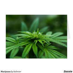 Marijuana blank insi