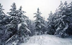 winter forest - Поиск в Google