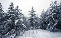 winter forest - Поиск в Google