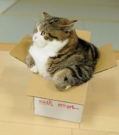 one of our cats is also a box cat - will crawl into ANY size receptacle she finds. What's that feline gene all about?