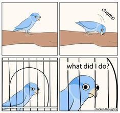 Top 16 Funny Pics And Memes – Disappointment Quotes Funny Birds, Cute Birds, Cute Funny Animals, Cockatiel, Budgies, Bird Mom, Hope Is The Thing With Feathers, Funny Parrots, Parrot Bird