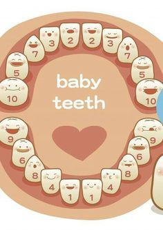 Orden dientes