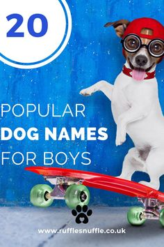 A selection of popular names and how to change the name of your new dog if he's from a rescue centre Cute Boy Names, Boy Dog Names, Cute Names For Dogs, Female Dog Names, Puppy Names, Basset Hound Dog, Beagle Dog, Dog Lover Gifts, Dog Lovers