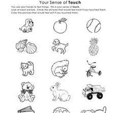 Teaching Sense of Touch - The Five Senses