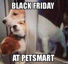 Black Friday at Petsmart. Cute Funny Animals, Funny Cute, Funny Dogs, Hilarious, Animal Quotes, Animal Memes, Animal Humor, Animal Pics, Black Friday Funny