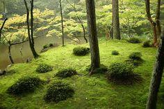 西芳寺 (苔寺)/京都