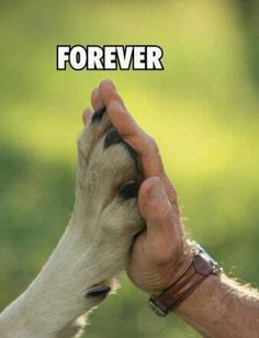 Forever. Thinking about doing this with my doggys.