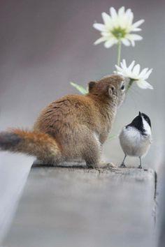 Squirrel & Chickadee