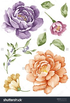 Watercolor design elements Stock Photos, Illustrations and Vector Art - Page 4 Illustration Blume, Botanical Illustration, Watercolor Illustration, Art Floral, Watercolor Design, Watercolor Flowers, Watercolor Paintings, Peony Flower, Flower Art