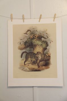 "26"" x 22""  ""Felis Scripta"" High Quality Lithograph  Joseph Wolf served an apprenticeship with a Koblentz firm of lithographers, and spent some time working in Leiden and Da... #trending #artprints #lithographs #paintings #drawings #art #print #lithograph #drawing"