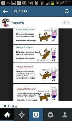 Positive negative reinforcement punishment