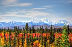 Mount McKinley in Autumn - Alaska, by Bruce Friedman.  Stunning!
