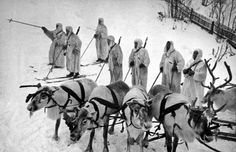 During World War II the Soviet Army established the world's only reindeer transport battalion. More than 1000 reindeer herders and 6000 reindeer were mobilized from Nenets Autonomous Okrug to the Karelian Front. History Online, World History, World War Ii, Soviet Army, Soviet Union, History Photos, Military History, Wwii, Samar