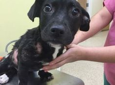 ER medical funds needed to help burned & tortured puppy!!!!!  Rescue Dogs Rock NYC
