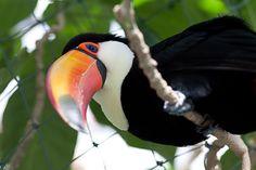 2015.12.30 掛川花鳥園 Parrot, My Photos, Bird, Animals, Parrot Bird, Animales, Animaux, Birds, Animal