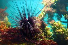 Spiky Sea Urchin
