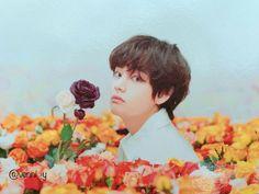 ♥️ BTS Love Yourself // Photocard Japan Edition Seokjin, Namjoon, Kim Taehyung, Suga Rap, Bts Bangtan Boy, Bts Boys, Park Ji Min, Billboard Music Awards, Daegu