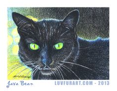Java Bean - colored pencil on watercolor paper.