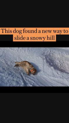 Funny Animal Memes, Dog Memes, Funny Animal Videos, Dog Videos, Super Cute Animals, Cute Little Animals, Cute Funny Dogs, Cute Funny Animals, Cute Animal Photos