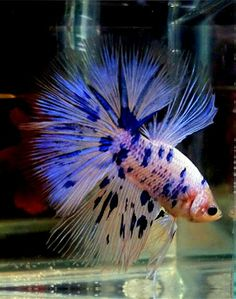 1000 images about betta fish tank ideas on pinterest for What type of water do betta fish need