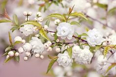 Little white flowers Wallpapers Pictures