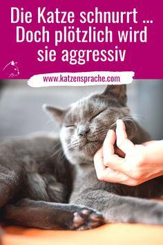 Die Katze schnurrt und lässt sich streicheln. Warum wird sie plötzlich aggressiv? ... #katze #katzen #katzenverhalten #katzentipps #katzenwissen #katzenhacks #katzendraußen #katzenstreiten #katzenfreundschaft #wohnungskatzen #katzebeißt #katzekratzt #katzestreicheln #katzschnurrt