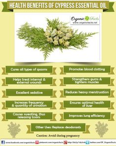 Health Benefits of Cypress Essential Oil: The health benefits of Cypress Essential Oil can be attributed to its properties as an astringent, antiseptic, antispasmodic, deodorant, diuretic, hemostatic, hepatic, styptic, sudorific, vasoconstricting, respiratory tonic and sedative substance.