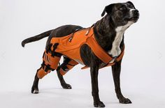 The Hipster Harness Is Here to Help Heal Your Dog's Hip Dysplasia - PetGuide