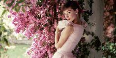Audrey Hepburn Audrey Hepburn Photos, Audrey Hepburn Style, Karen Elson, Emilio Pucci, Hollywood Stars, Diva Fashion, Fashion Photo, Frank Sinatra Quotes, Red Checkered Shirt